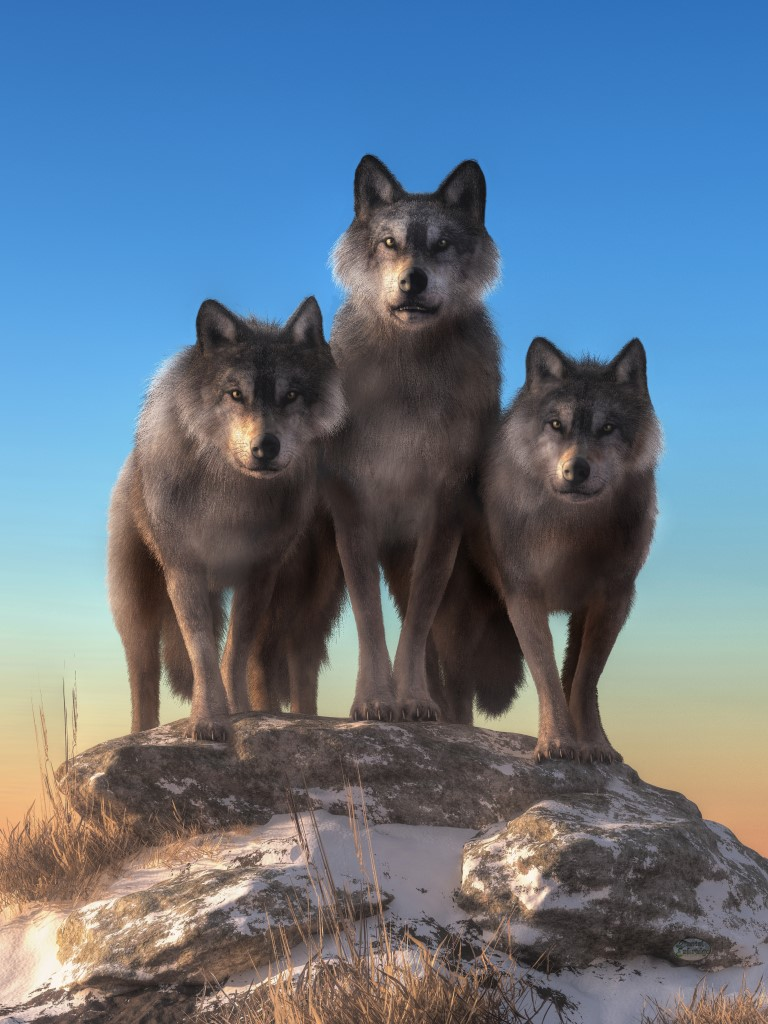 wolf art: The Staring Contest